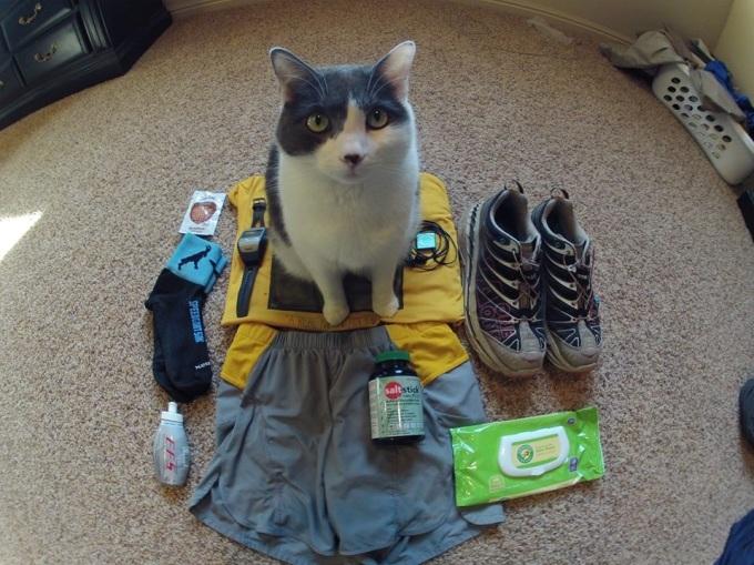 Matt Cat